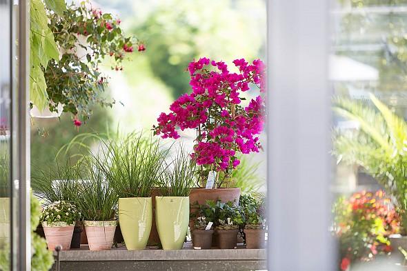 terrasse balkon schallert blumen bludenz. Black Bedroom Furniture Sets. Home Design Ideas